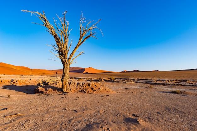 Sossusvlei namibia, malerische lehm-salz-ebene mit geflochtenen akazienbäumen und majestätischen sanddünen.