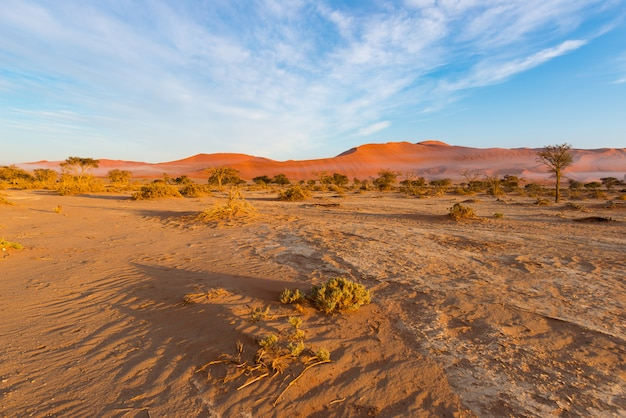 Sossusvlei namibia, reiseziel in afrika. sanddünen und lehmsalzpfanne mit akazienbäumen.