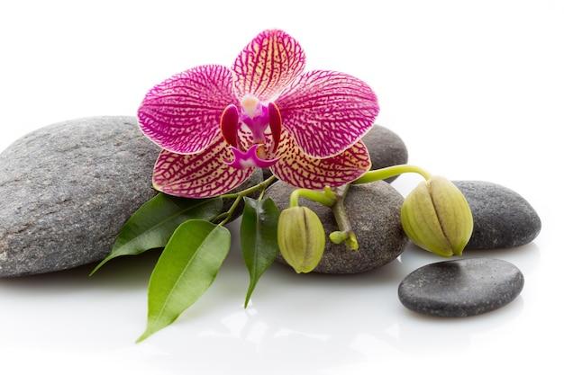 Spa masage steine und orchidee lokalisiert auf weiß