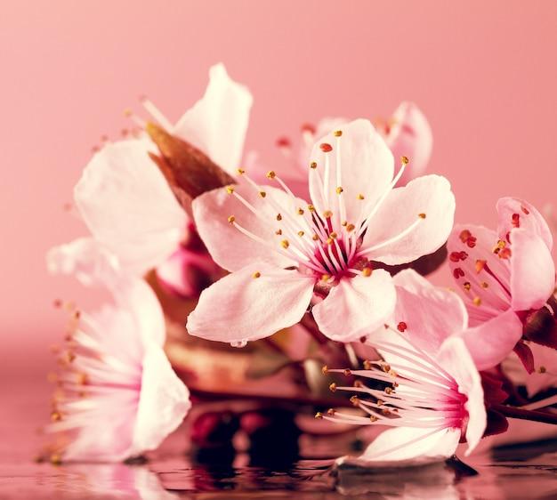Spa natur konzept. nahaufnahme von schönen pint lila blumen auf wasser mit platz für text.