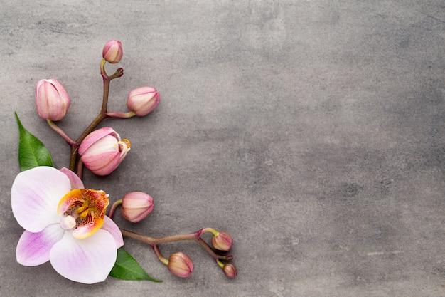 Spa orchideenthema objekte auf grau.