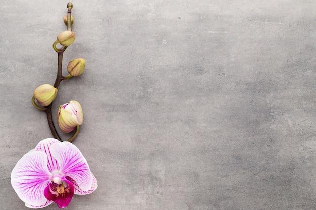 Spa orchideenthema objekte auf grauem hintergrund.