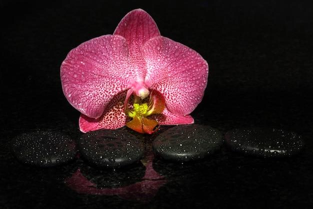 Spa-steine und orchidee auf einem dunklen hintergrund