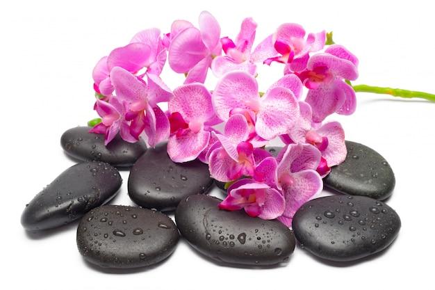 Spa steine und orchideenblüten, isoliert auf weiss,