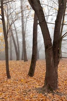 Spätherbst im park, nebliges wetter bewölktes wetter, laub von bäumen gefallen