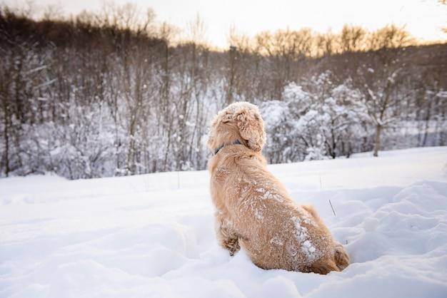 Spaniel sitzt mit dem rücken in einem schneeverwehungshund.