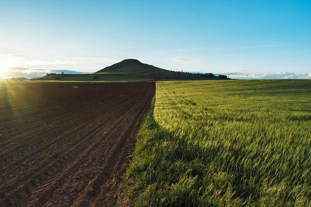 Spanische landschaft mit blauem himmel, grünem becher und frischem schwarzem boden.
