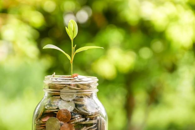 Sparen sie geld für anlagekonzept. pflanze wächst aus münzen