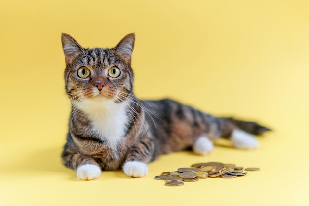 Sparen sie geld und zahlen sie ein kontokonzept ein. lustige katze lügt und schützt die ersparnisse. haustier mit münzen.
