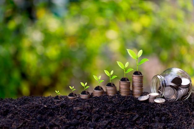 Sparwachstumskonzept, pflanze sprießt aus dem boden