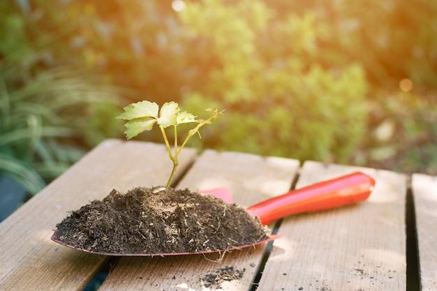 Spaten mit erde und pflanze arrangiert