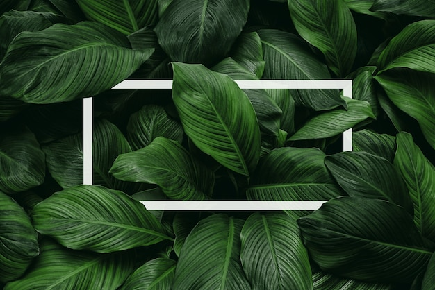 Spathiphyllum cannifolium konzept grüne abstrakte textur mit weißem rahmen natürlichem hintergrund
