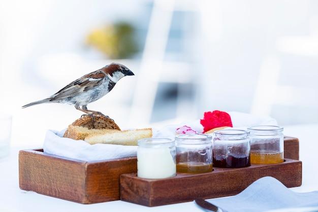 Spatz auf dem tisch beim frühstück