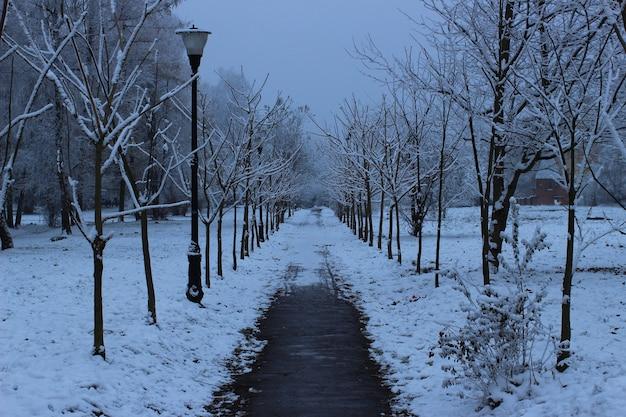 Spazieren sie im winter im park