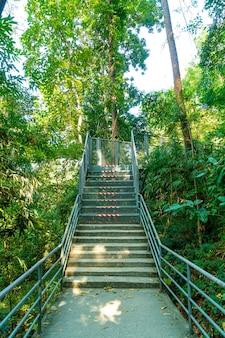 Spaziergang durch den wald bei canopy walks im queen sirikit botanic garden chiang mai, thailand