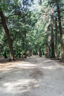 Spaziergang im wald und sandstrand am sonnigen tag