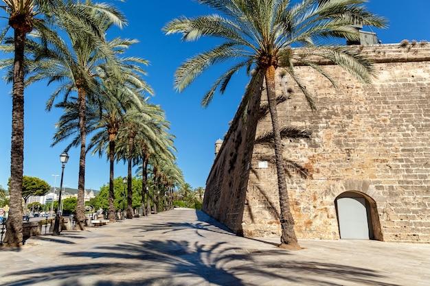 Spaziergasse mit palmen in der nähe einer alten burg, palmengasse