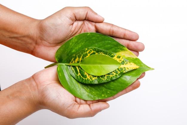 Speichern sie das baumkonzept, grüne blätter an hand