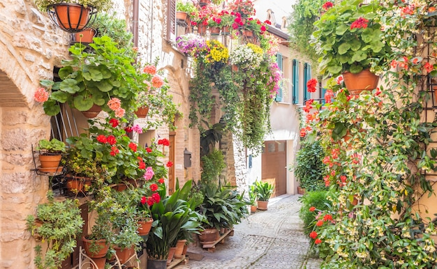 Spello, italien - ca. juni 2021: blumen in der alten straße. spello befindet sich in der region umbrien, italien.