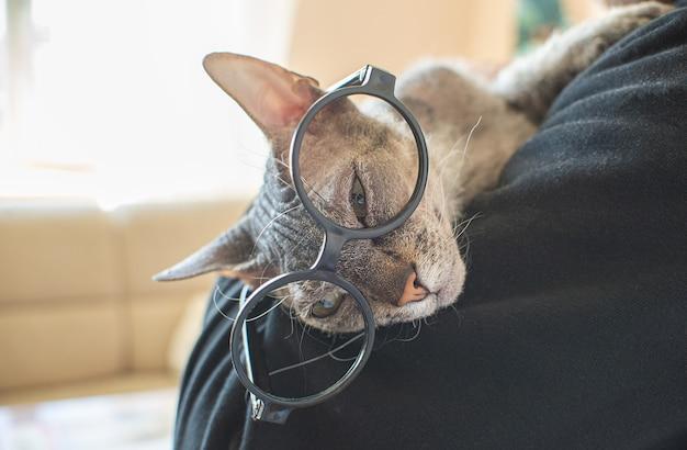 Sphinxkatze mit brille liegt zu hause auf der schulter eines mannes. lustiges kahles katzenhaustier. platz für text.