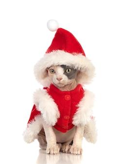 Sphinxkatze mit weihnachtskleidung lokalisiert auf einem weißen hintergrund