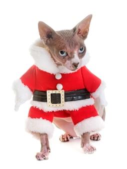 Sphinxkatze und weihnachten