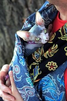 Sphynx-katzenabschluß herauf das porträt, das sie betrachtet