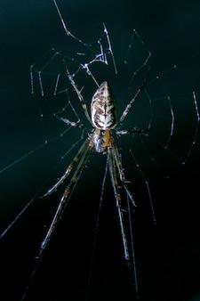 Spider brown auf spinnennetz