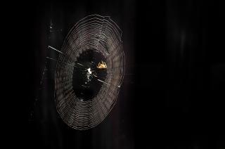 Spiderweb schatten