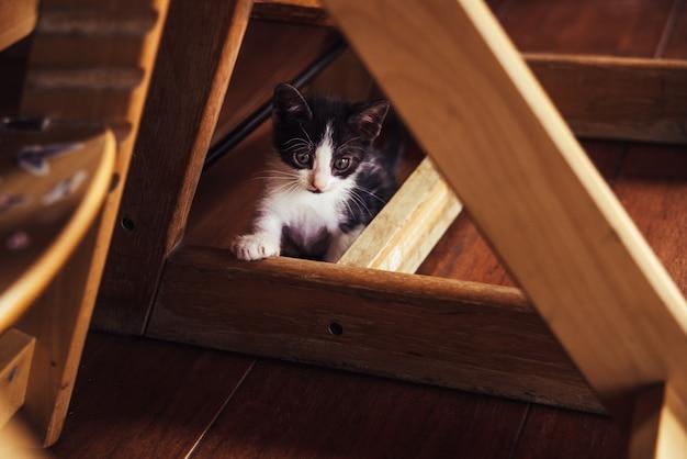 Spielerisches kätzchen, das unter der haustabelle sich versteckt.