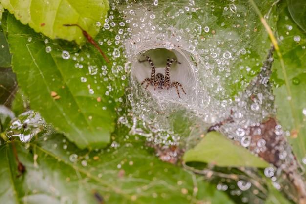Spinne auf dem weißen haus