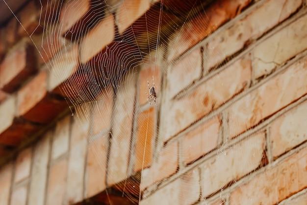 Spinne auf einem netz in der nähe des hauses