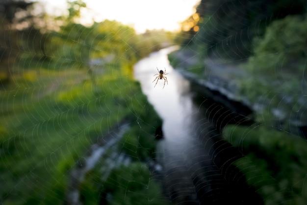 Spinne auf großem netz nahe fluss