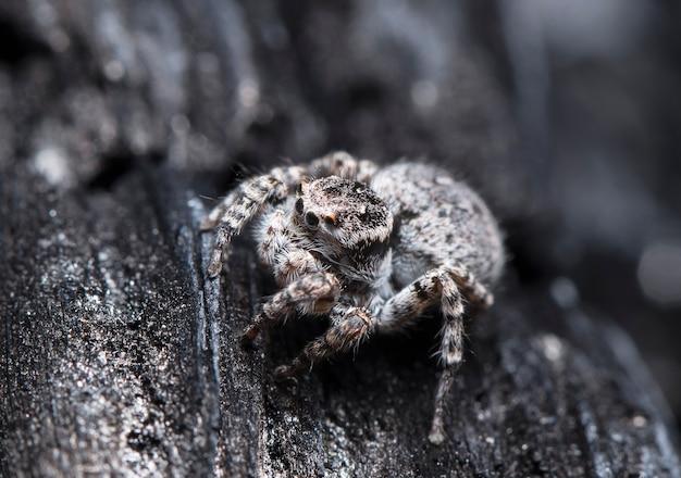Spinne ein rennfahrer