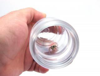 Spinne im empfänger