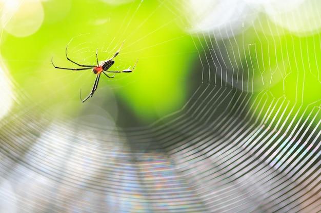Spinne im nest