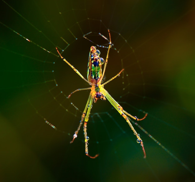 Spinne im web