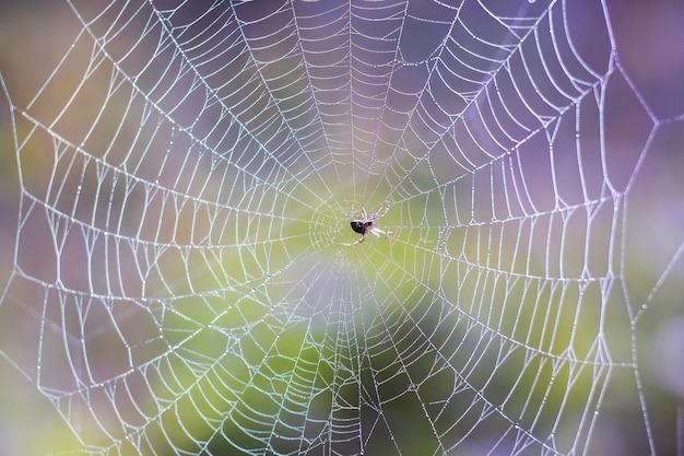 Spinne in der mitte des spinnennetzes auf einem farbigen verschwommenen hintergrund