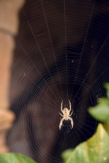 Spinne in der mitte ihres spinnennetzes, das wartet, um zu jagen