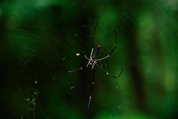 Spinne in der natur auf grünem hintergrund
