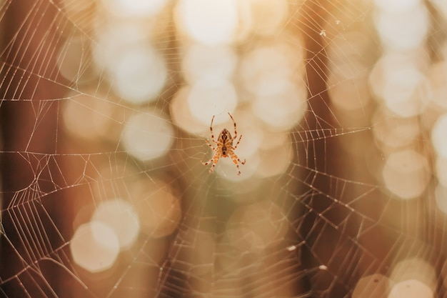 Spinne in einem netz im wald.
