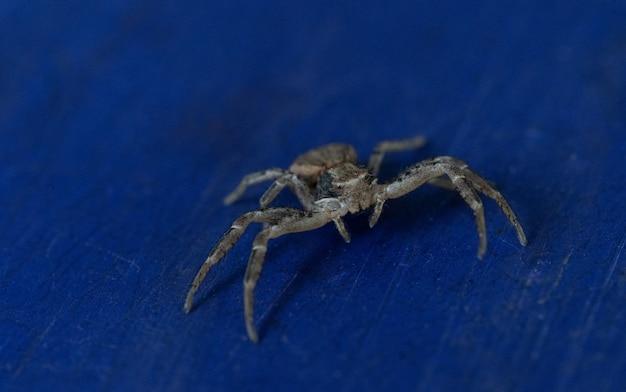 Spinne nahaufnahme