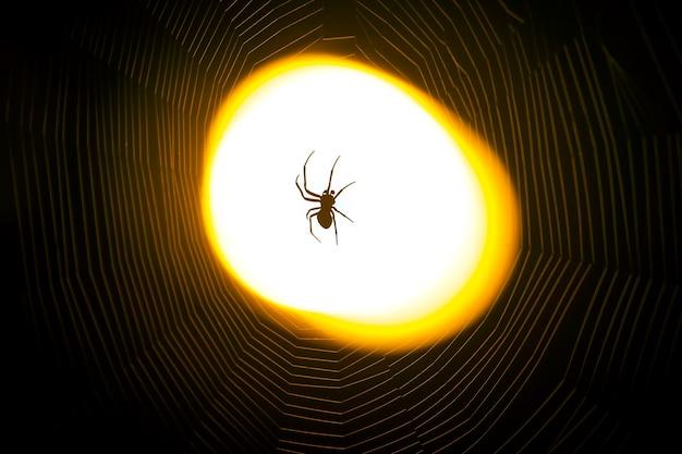 Spinne sitzt nachts auf einem netz im licht einer laterne