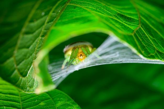 Spinne unter dem blatt