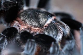 Spinne wildlife