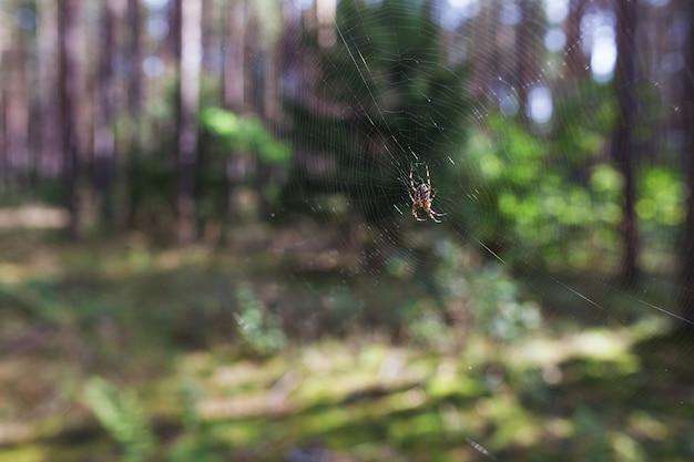 Spinnenklettern im web im herbst