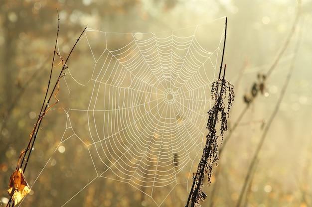 Spinnennetz auf einer wiese bei sonnenaufgang