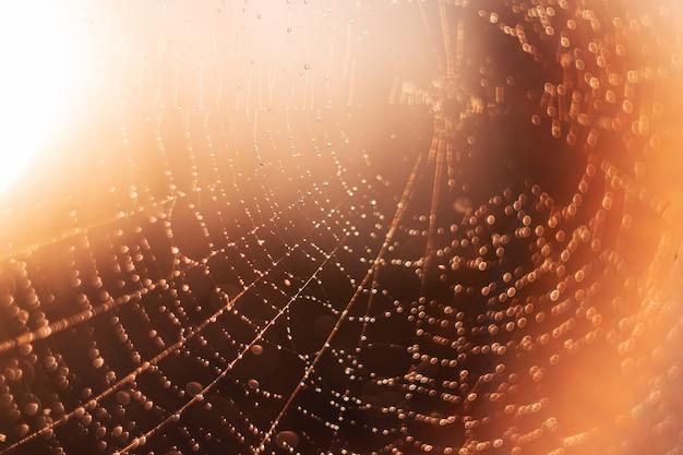 Spinnennetz auf gelb unscharfer hintergrundnahaufnahme