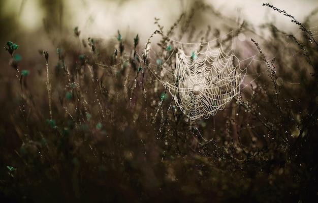 Spinnennetz im gras mit tropfen in blautönung