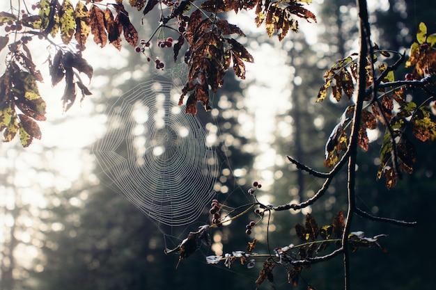 Spinnennetz in einem baum